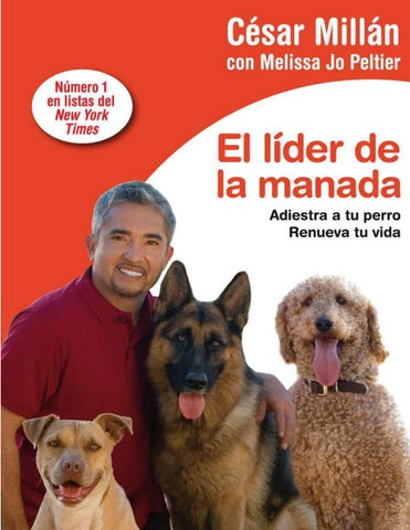 Doggie Dating Citas 779812